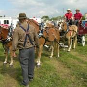 Haflingers-2009-003
