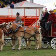 Haflingers-2009-004