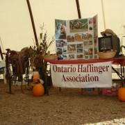 Haflingers-2009-005