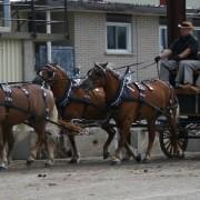 Haflingers-2009-019