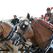 Haflingers-2009-022